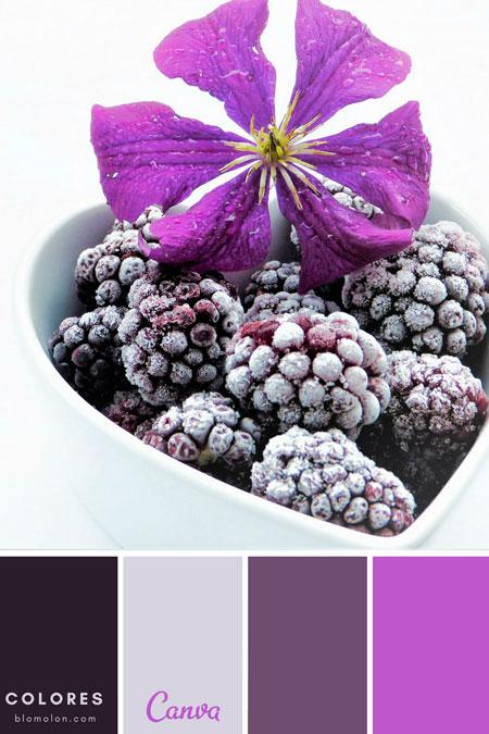 paletas_de_colores_mes_de_agosto_3