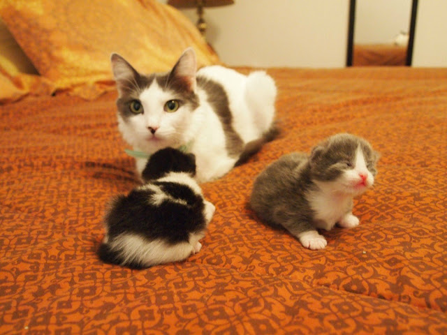funny cats, cute cat pictures, cat and her babies