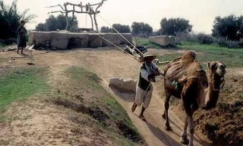الطريقة التقليديّة لإستخراج الماء أوائل القرن الماضي.