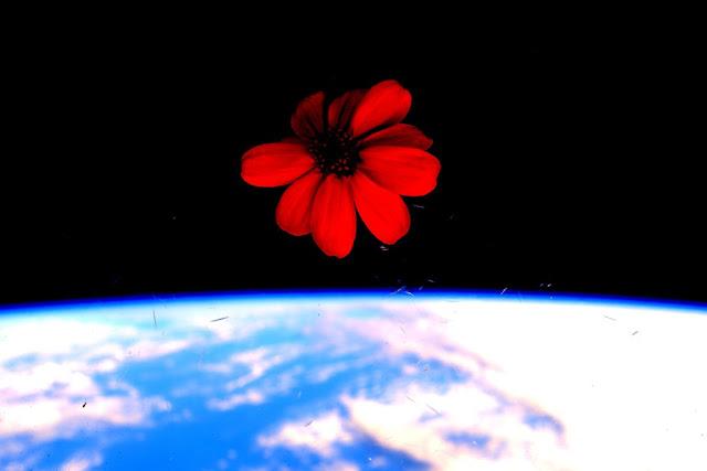 #NASA #ScottKelly #ISS #NASANET #SpaceFlower #FlorEspacio