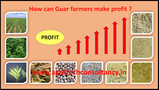 Guar, guar gum, Guar gum cultivation, Guar seed price, Guar gum price, Guar seed profit, guar mandi bhav, guar gum profitable, guar gum export, guar gum export demand, guar demand USA, Guar demand local, How can Guar seed farmer make profit ?, Guar, guar gum, guar price, guar gum price, guar demand, guar gum demand, guar seed production, guar seed stock, guar seed consumption, guar gum cultivation, guar gum cultivation in india, Guar gum farming, guar gum export from india , guar seed export, guar gum export, guar gum farming, guar gum cultivation consultancy, today guar price, today guar gum price, ग्वार, ग्वार गम, ग्वार मांग, ग्वार गम निर्यात 2018-2019, ग्वार गम निर्यात -2019, ग्वार उत्पादन, ग्वार कीमत, ग्वार गम मांग, Guar Gum