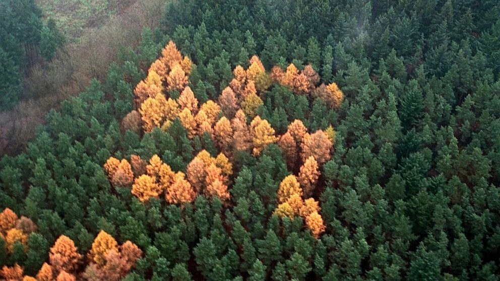 swastika forest