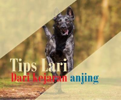 12 Tips mengatasi kejaran anjing agar tidak digigit