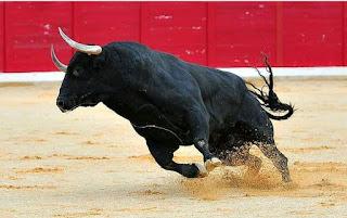 Bull husband