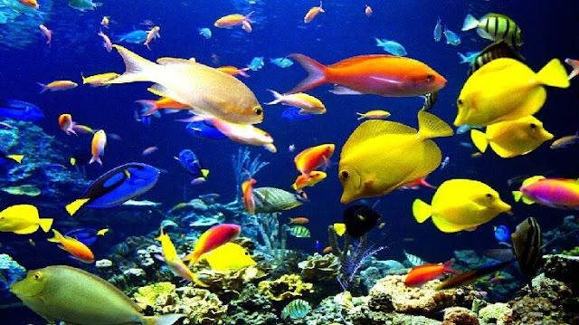 بحث عن الاسماك وانواعها