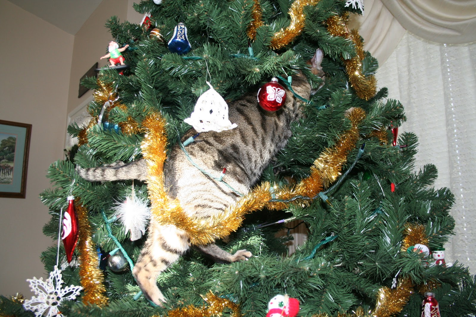 The Human Says This Would be Jacey if He got a Christmas Tree