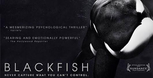 Blackfish documentary poster