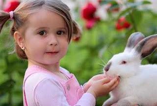 gambar perlukan kelinci dimandikan