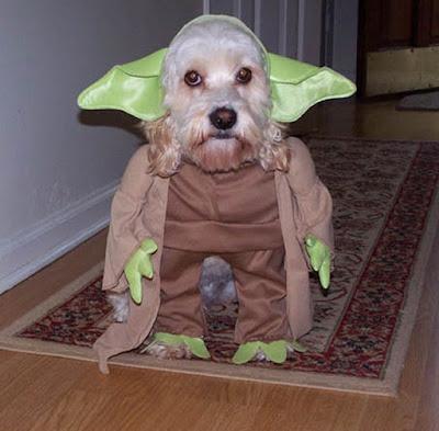 costume moche pour chien
