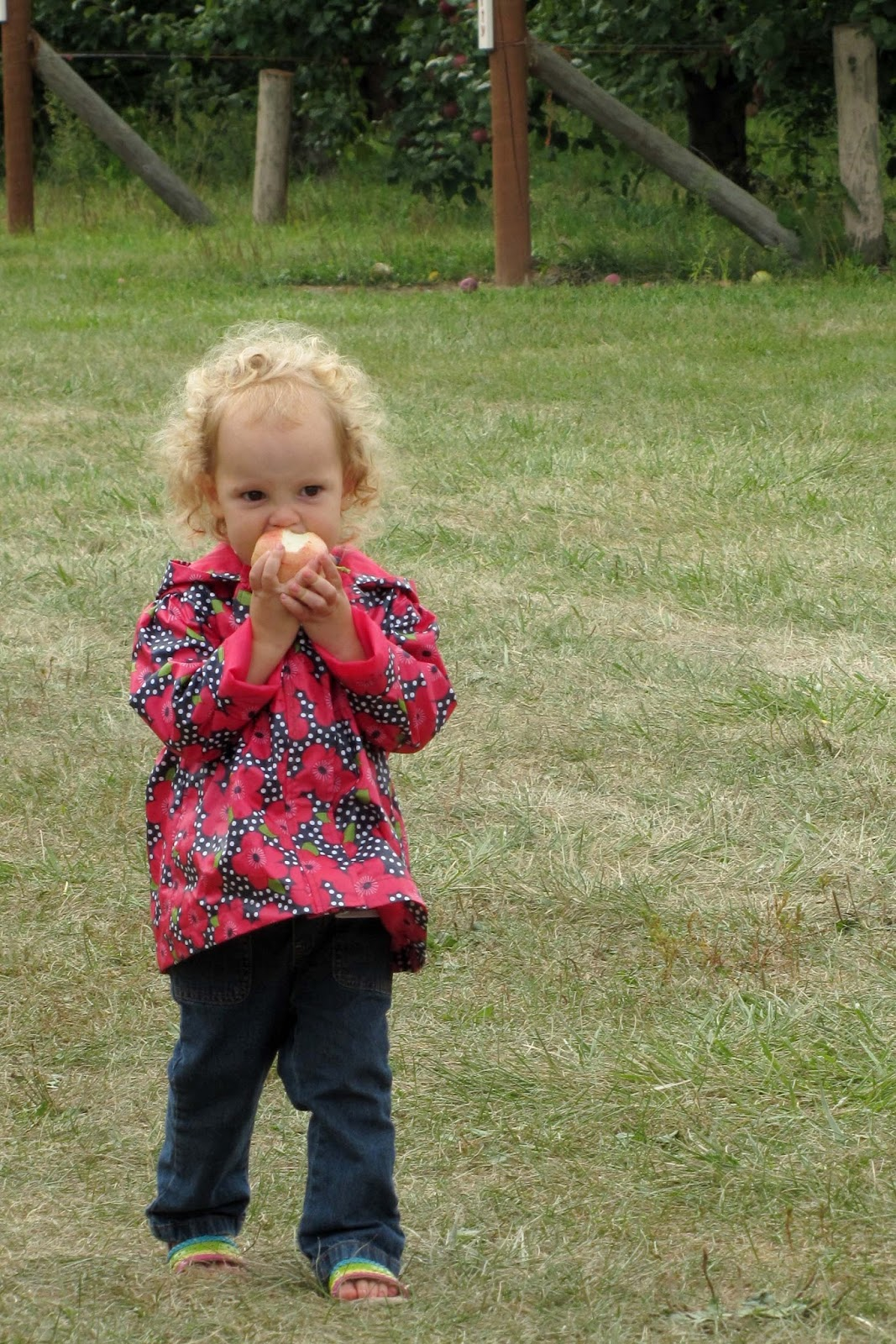 Tips For Apple Picking With Kids