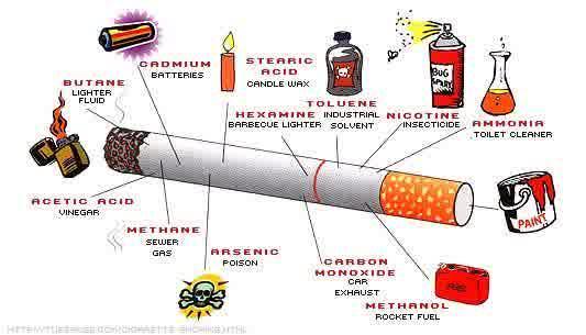 Manfaat Rokok Bagi Lingkungan Sekitar dan Manusia