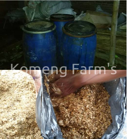 Pembuatan pakan ternak HMT fermentasi basah