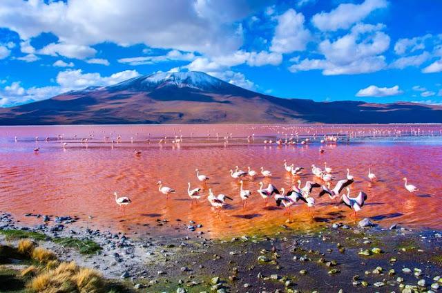 بحيرة بالكاش