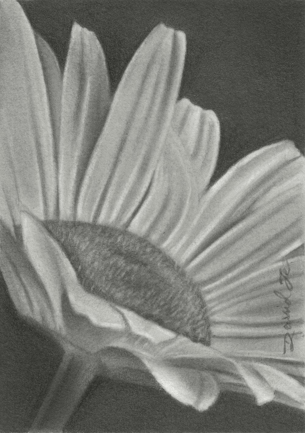 Pencil Drawings by David Te: September 2011