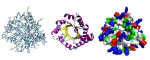 Protein Blog Riyawan
