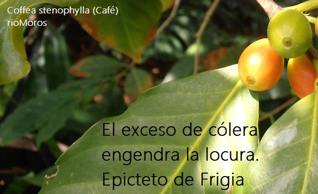 El exceso de cólera engendra la locura Epicteto de Frigia