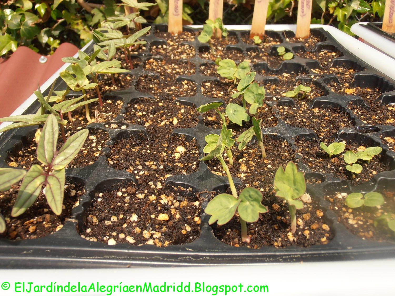 El jard n de la alegr a aclareo y repicado del semillero for El jardin de la alegria cordoba
