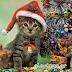 Χριστουγεννιάτικες εικόνες.....giortazo.gr