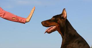 Langkah Mudah dan Praktis Untuk Membuat Anjing Anda Berhenti Menyalak