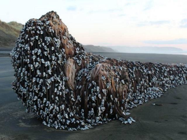 Muncul Gergasi Laut atau Makhluk Asing Di Pantai New Zealand?