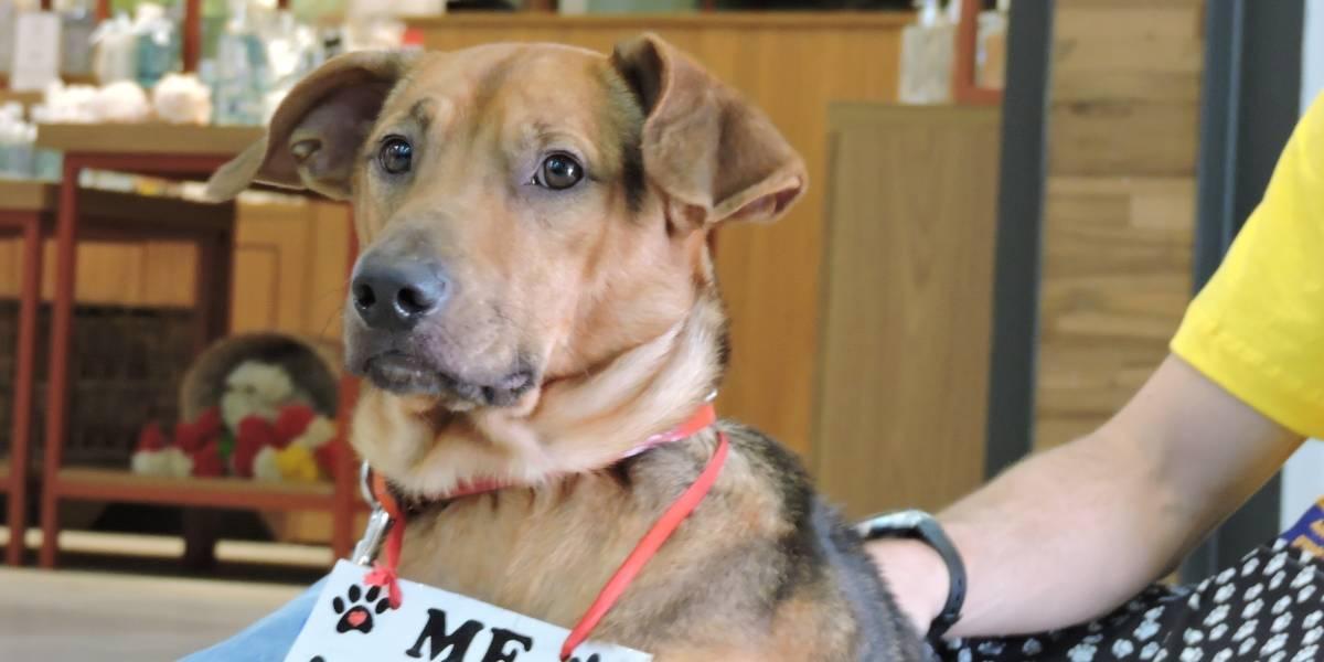 Embaúba realiza 2ª Feira de Adoção de Cães e Gatos em maio