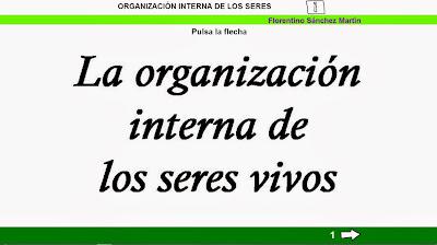 https://cplosangeles.educarex.es/web/edilim/tercer_ciclo/cmedio/los_seres_vivos/organizacion_seres_vivos/organizacion_seres_vivos.html