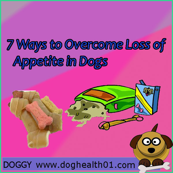 7 Ways to Overcome Loss of Appetite in Dogs