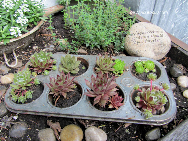 A Dozen Planting Ideas for Hen and Chicks
