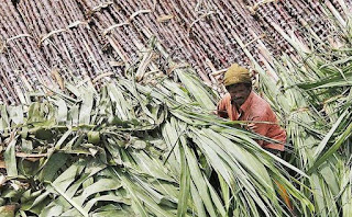 Centre decided to Offer Sugar Export Subsidy