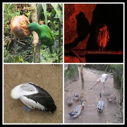 Baby Zoo Taman Safari Indonesia 1
