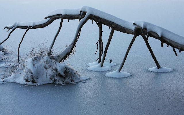Een bevroren tak in het water