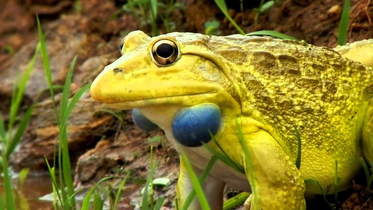25 Adorable Animals With Extraordinary Colors And Markings That Took Our Breath Away