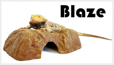 Take care bearded dragons