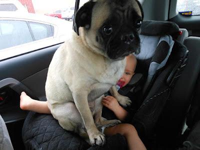 bebé se siente incomodo por estar debajo de un perro.