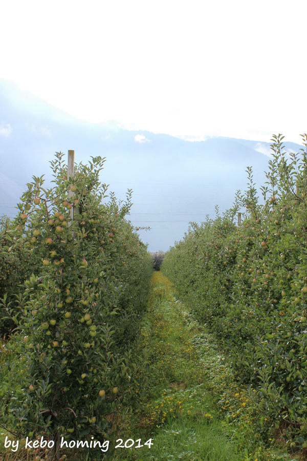 Südtirol, Apfel, Fotografie, der Blick, Foodblog, Lifestyleblog, Apfelernte, August