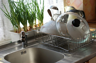 Stainless steel kitchen sink with plants in window