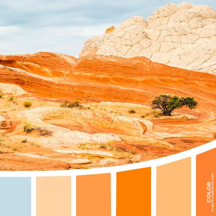 color_486