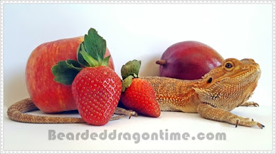 can bearded dragons eat fruit