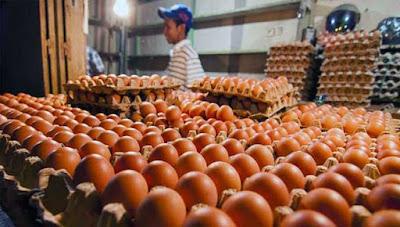"""Ambon, Malukupost.com - Dinas Perindustrian dan Perdagangan (Disperindag) Provinsi Maluku mencatat harga telur ayam ras di Kota Ambon saat ini sudah mulai turun hingga mencapai Rp1.700/butir. """"Hasil pantauan yang dilakukan petugas pemantau dan pengawasan Disperindag Maluku Dede Banjar telah terbukti bahwa harga telur ayam ras sudah mulai turun hingga mencapai Rp1.700/butir,"""" kata Kadis Perindag Provinsi Maluku Elvis Pattiselano di Ambon, Minggu (10/6)."""