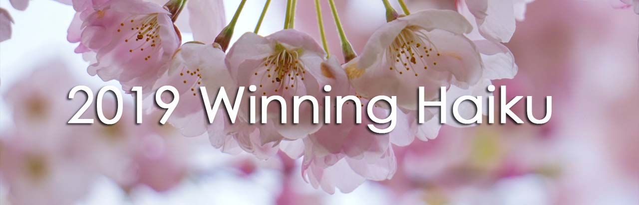 **HAIKU CONTESTS**  ***** MY AWARDS   ****  Vancouver Cherry Blossom Festival CANADA