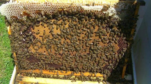 Τροφοδότηση μελισσιών: Όλα τα μυστικά από παλιό μελισσοκόμο