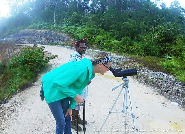 Birdwatching in Tambrauw