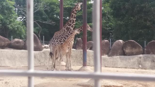 safari malacca