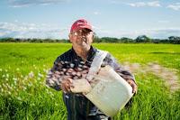 usaha di daerah sepi, peluang usaha daerah sepi, bisnis di tempat sepi, bisnis di daerah sepi, bisnis pertanian, pertanian padi, padi, bertani, sawah, menanam padi