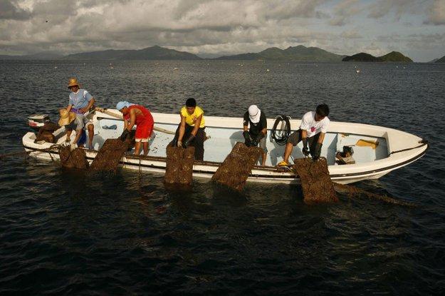 Đưa các lồng hàu dưới biển lên bờ để thu hoạch ngọc trai.