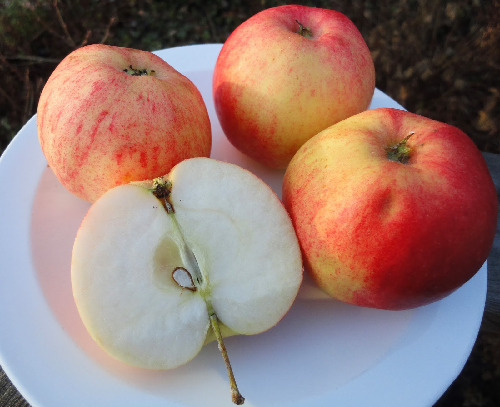 svenska äpplen santana