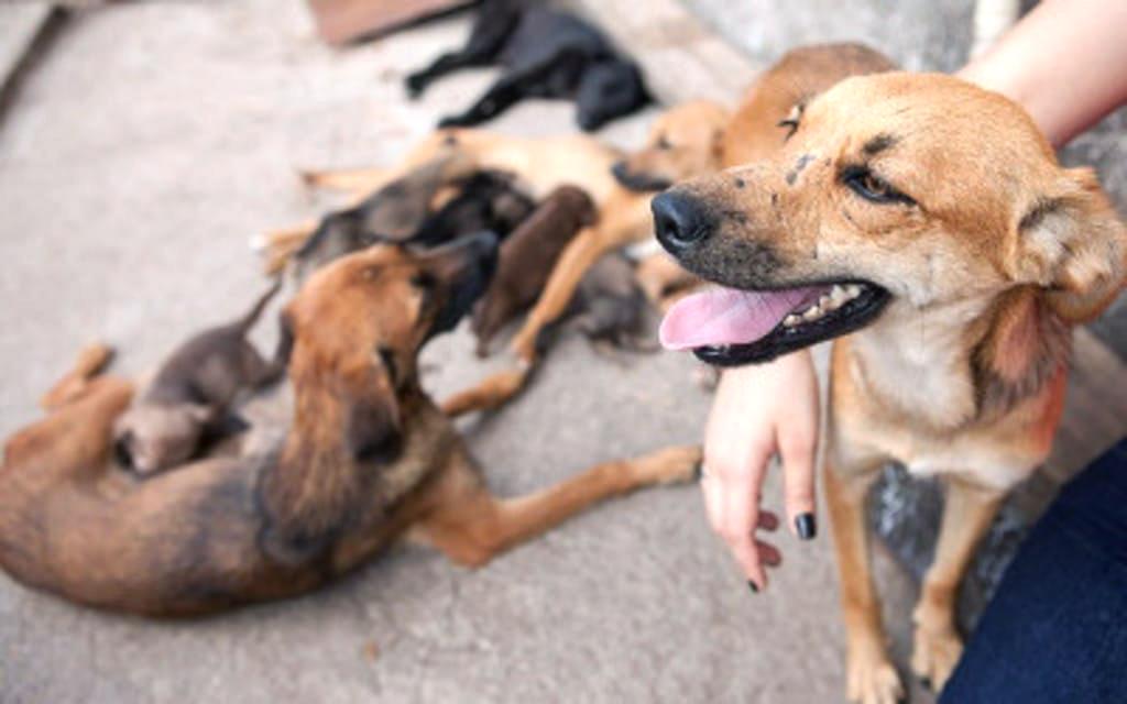 Resultado de imagem para Pedófilo arrasta menina para terreno baldio e 5 Cães vadios ouvem e destroem o agressor