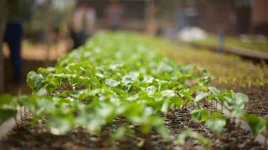 Ecosia, el buscador que ayuda a reforestar el planeta