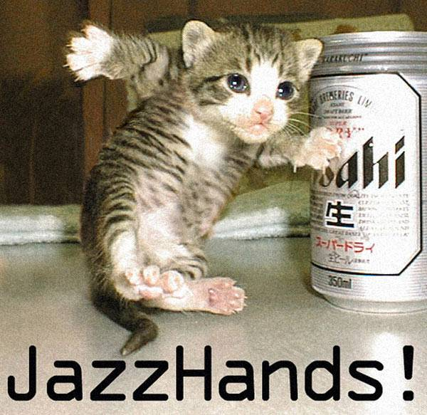 Funniest Cat Pictures Ever