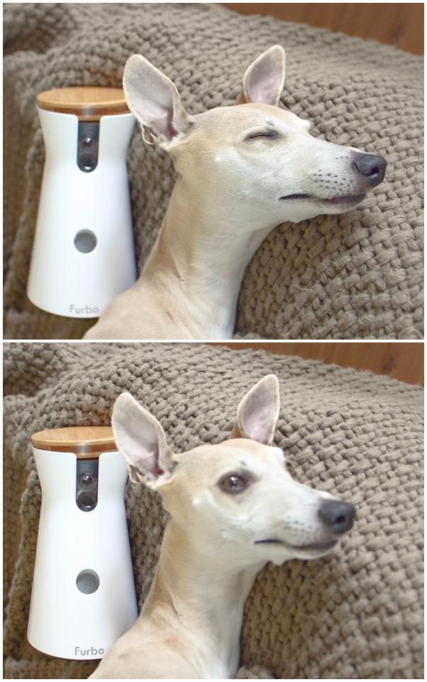 Mein Testbericht zur Furbo Hundekamera: test bericht hund erfahrungsbericht kamera haustiere beobachten